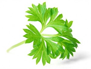 Parsley health benefits 300x229 Parsley Health Benefits, Nutritional Values   And All You Will Need To Know About it